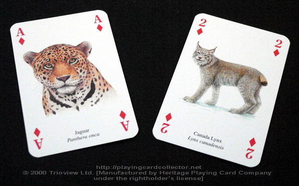 Wild-Cats-Playing-Cards-Ace-of-Diamonds