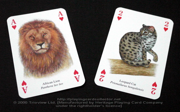 Wild-Cats-Playing-Cards-Ace-of-Hearts