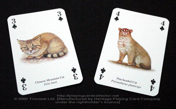 Wild-Cats-Playing-Cards-Clubs-3-4