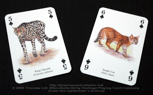 Wild-Cats-Playing-Cards-Clubs-5-6