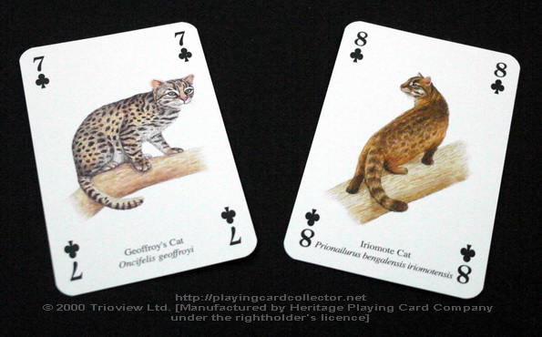 Wild-Cats-Playing-Cards-Clubs-7-8