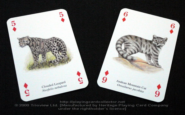 Wild-Cats-Playing-Cards-Diamonds-5-6