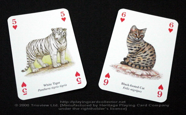 Wild-Cats-Playing-Cards-Hearts-5-6