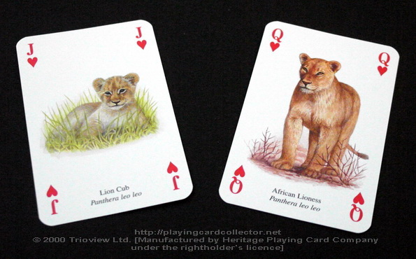 Wild-Cats-Playing-Cards-Hearts-J-Q