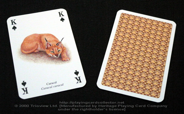 Wild-Cats-Playing-Cards-King-of-Spades