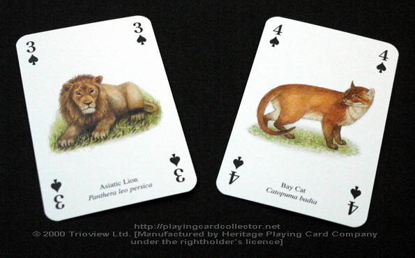 Wild-Cats-Playing-Cards-Spades-3-4