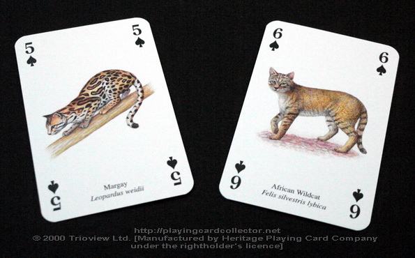 Wild-Cats-Playing-Cards-Spades-5-6