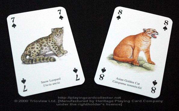 Wild-Cats-Playing-Cards-Spades-7-8