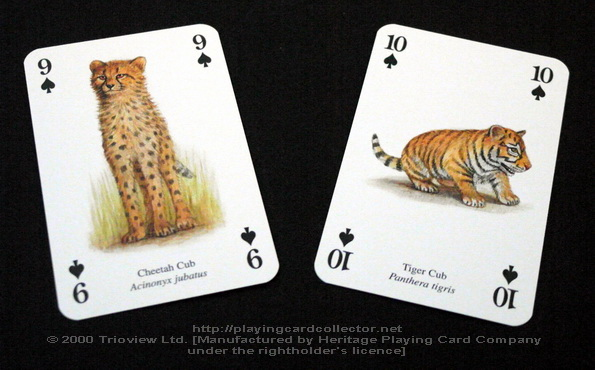 Wild-Cats-Playing-Cards-Spades-9-10
