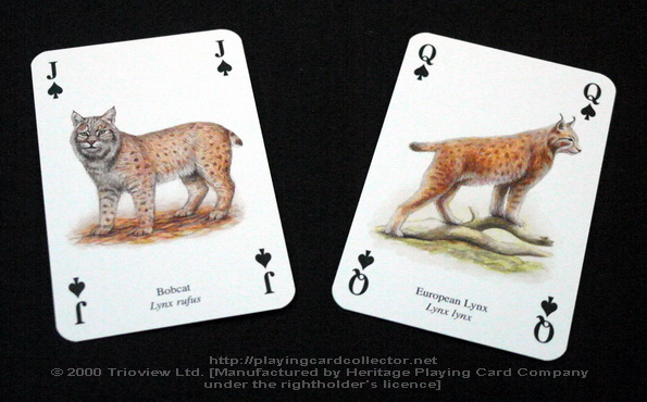 Wild-Cats-Playing-Cards-Spades-J-Q